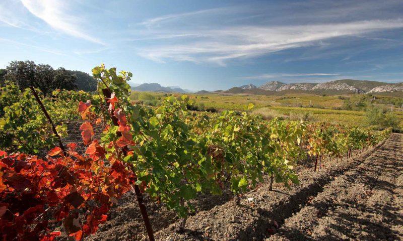 Pogled na vinograde in pokrajino na obrobju Pirenejev, jugozahodna Francija