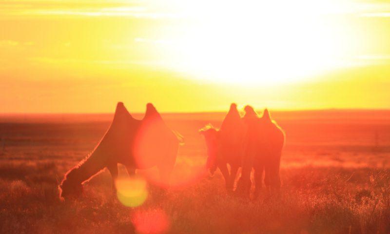 Zato se splaca! Proti jugu Kazahstana.